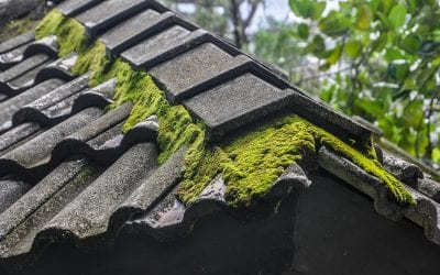 Summer Rooftop Issues – Moss