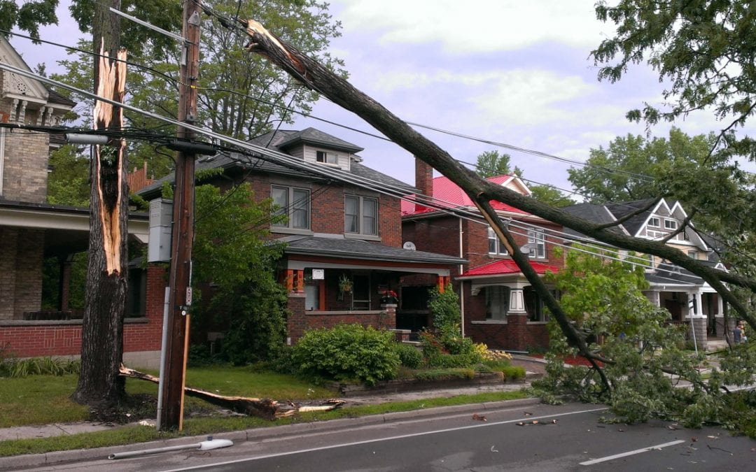 What Should I Do if a Tree Falls on my Roof?